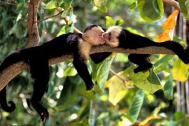 6 Hewan yang Ternyata Pandai Merayu Pasangan