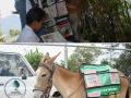 Perpustakaan dengan keledai