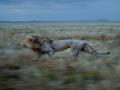 Kecepatan Lari yang Luar Biasa