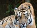 Kebun Binatang Australia
