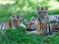 Kebun Binatang Bronx, Australia
