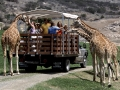 Kebun Binatang San Diego, Amerika