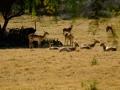 Taman Nasional Afrika, Afrika Selatan