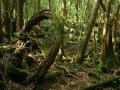 Hutan Aokigahara (Jepang)