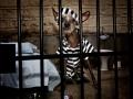 Chini mendekam di penjara
