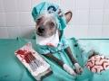 Chini sang dokter ahli bedah