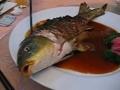 Ikan Ying Yang