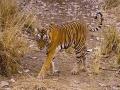 1. Taman Nasional Bandhavgarh