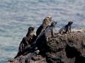 6. Kepualan Galapagos