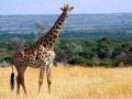 7. Taman Nasional Ethosa