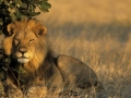 2. Taman Nasional Kruger