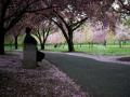 Taman Botani Brooklyn — Brooklyn, N.Y.