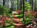 Taman Callaway — Pine Mountain, Ga.