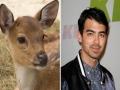 9. Joe Jonas – Bambi