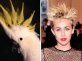 2. Miley Cyrus – Burung Kakatua