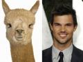 1. Taylor Lautner – Alpaca