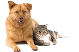 Anjing dan Kucing Terkena Demam BBM for Android