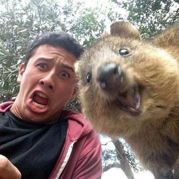Quokka Selfie 1
