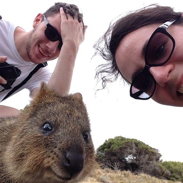Quokka Selfie 4