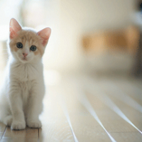 Llovely-baby-cat-wallpaper
