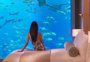 Mimpi tentang Ikan, Apa Artinya?