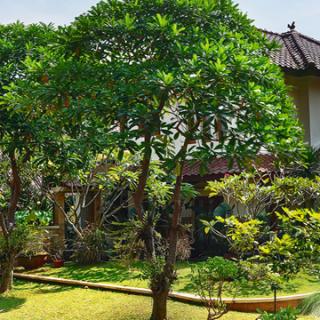 Mengenal Fengsui Taman untuk Rumah Tinggal